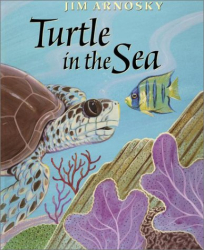 Jim Arnosky: Turtle In The Sea