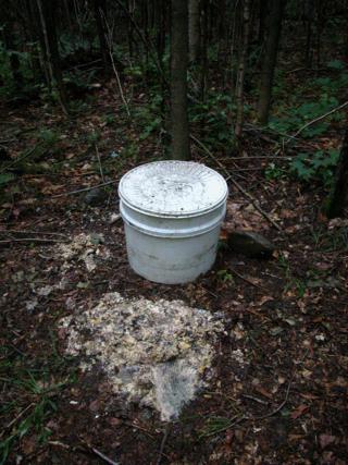 Bear bait pile
