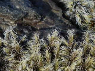 Kupersmith-moss-covered-lav