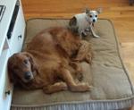 Jeremy's Dogs