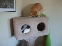 Kitties_catnip1