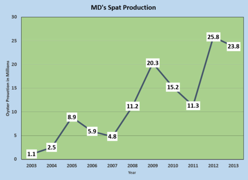 MD spat production 2003-2013