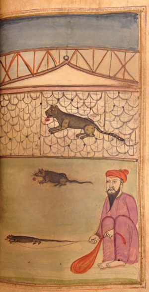 Two illustrations from different copies of Abu'l-Faz̤l's ʻIyār-i dānish Illustrating the story of the cat and the rat (Left: British Library Or.477, f. 239v; right IO Islamic 1403, f. 168v)