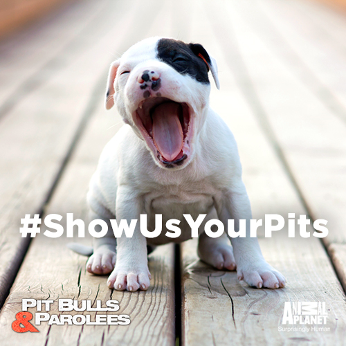Show-us-your-pits4-500