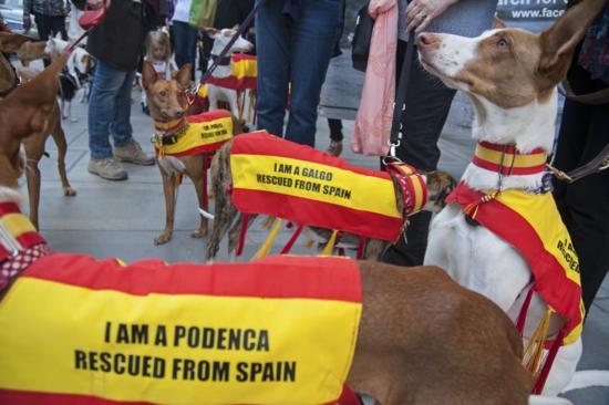 Podenco Petition - DSC_3508