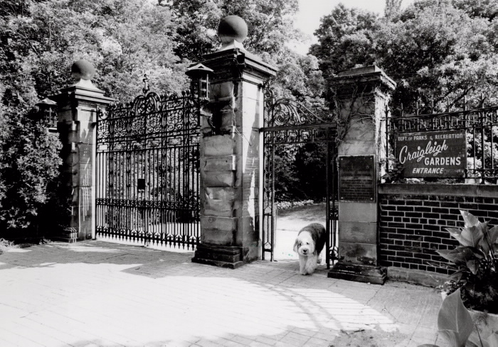 Large gates to a lush garden with a dog walking through the entrance