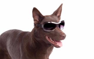 Blind-dog-ftr
