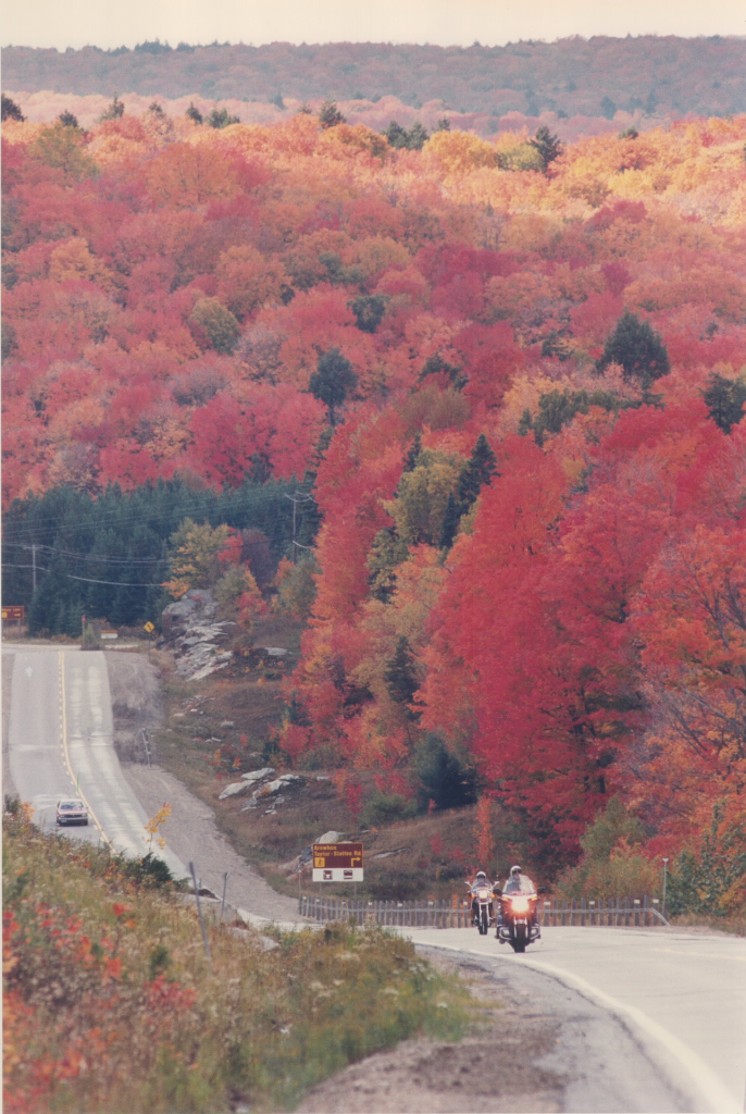 Scarlet Maple coloured trees Highway 60